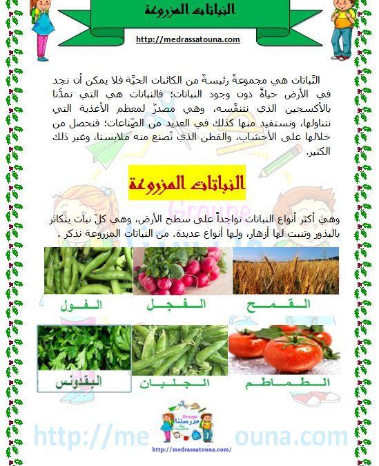 النباتات المزروعة والمغروسة والتلقائية مدرستنا